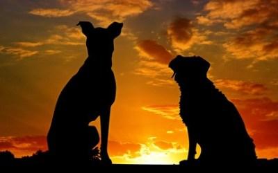 Natural & Holistic Pet Care (Dog, Cat Health Training - P2)