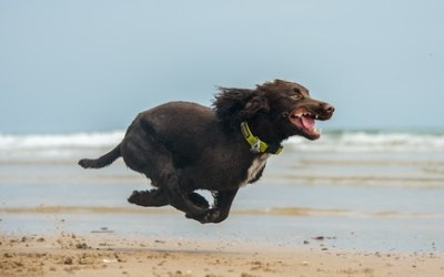 Dog Training for Humans -Easy Peasy Recall Training for Dogs