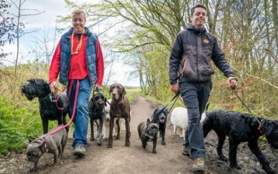 Dog Training For Humans - 'Worry Free Dog Walks'.