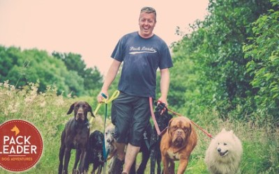 Walk Yourself Wealthy - The Dog Walker Business Course