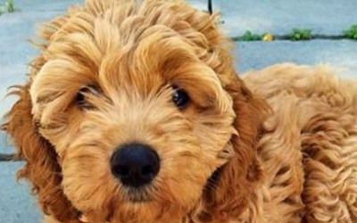 Love Dogs? Make Money as a Pet-sitter