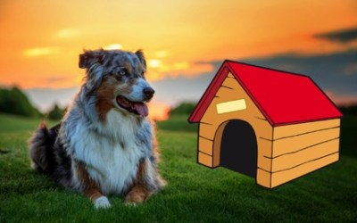 How to Start a Pet Care Business: Open Your Own Dog Kennel!