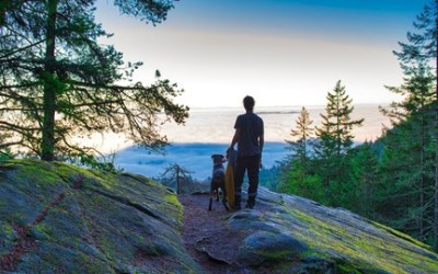 Dog Owners & Professionals: Where To Go From Here?