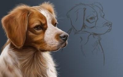 Digital Art: Painting A Pet Portrait