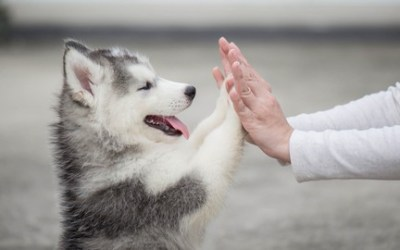 Train Your Puppy and Learn to Take Care of Your Dog