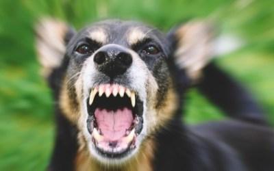 Dog Aggression Fighting & Biting