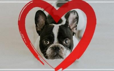 Punishment-Free Dog Training: 30 Day Perfect Dog Blueprint
