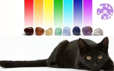 Crystal Healing for Animals Certification