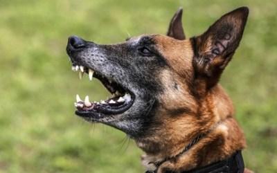 Dog Training: 50 Common Dog Behaviors & Ways to fix them
