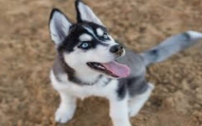 How To Choose And Train Your Next Dog A Course For Pet Lover