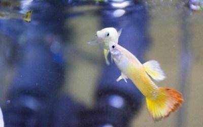 Montar tu primer acuario