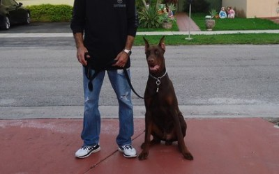 The 2-Step Leash Training System