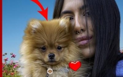 DOG Care Dog Training Dog LOVE Blueprint - ALL YOU NEED