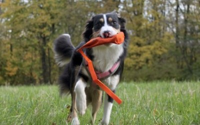 Predation Substitute Training