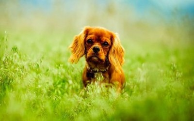 Dog Care, Dog Behavior, Dog Training For New Owners