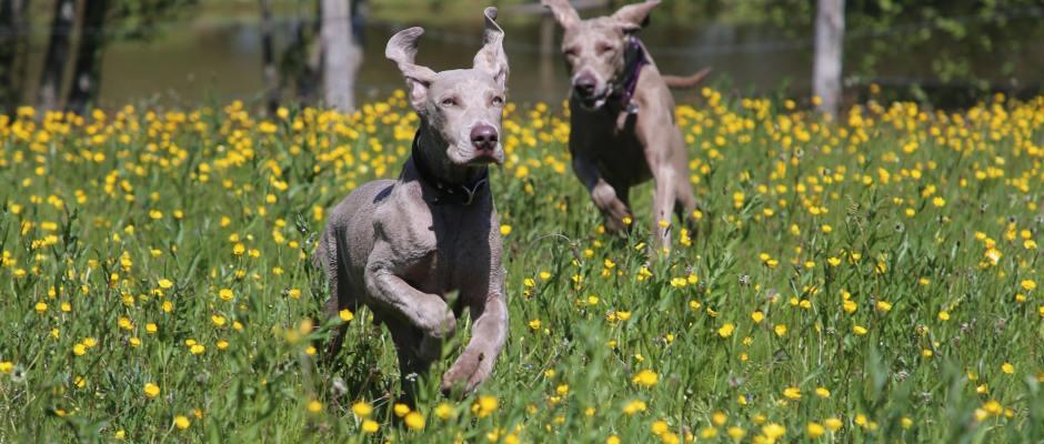 Dog spring joy dog friendly season