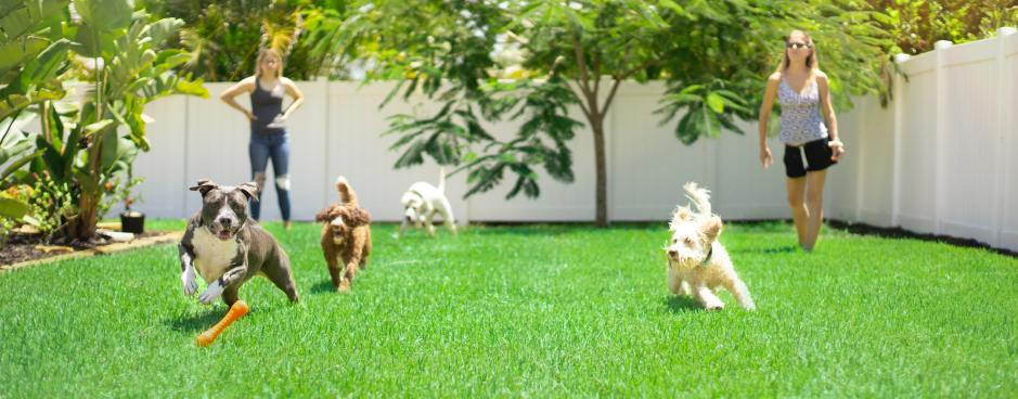 women with dogs playing in yard