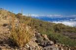Arbusti a 2000m sulle pendici di La Palma