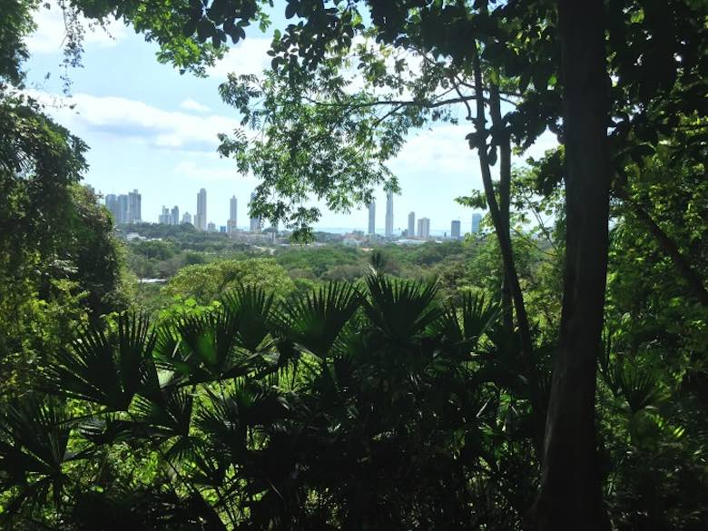 A view over Panama City behind the palms from the Parque Metropolitano