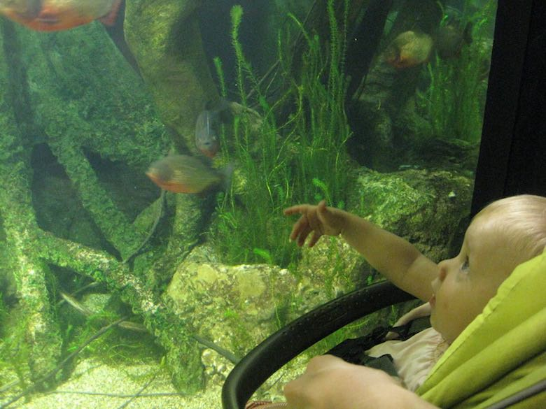 CosmopoliClan's little girl admiring the fishes in a fish tank in the aquarium of Genoa, Italy