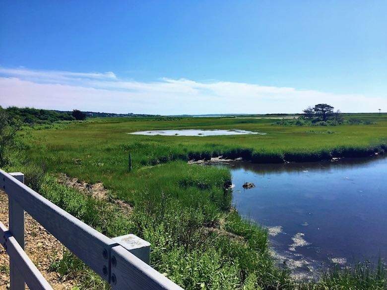 Beautiful marshlands near Falmouth in Cape Cod