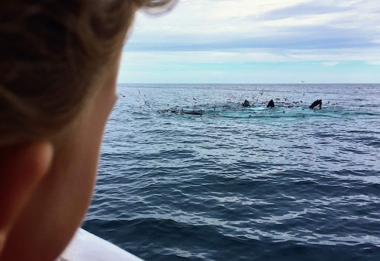 Profile of a ittle girl looking at the whales during a whale watching trip from Provincetown, Cape Cod, to the Stellwagen Bank