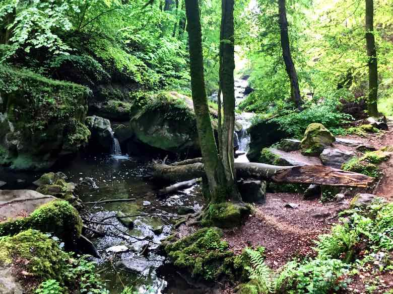 The beautiful scenery found during a hike in the Mullerthal in Luxemburg