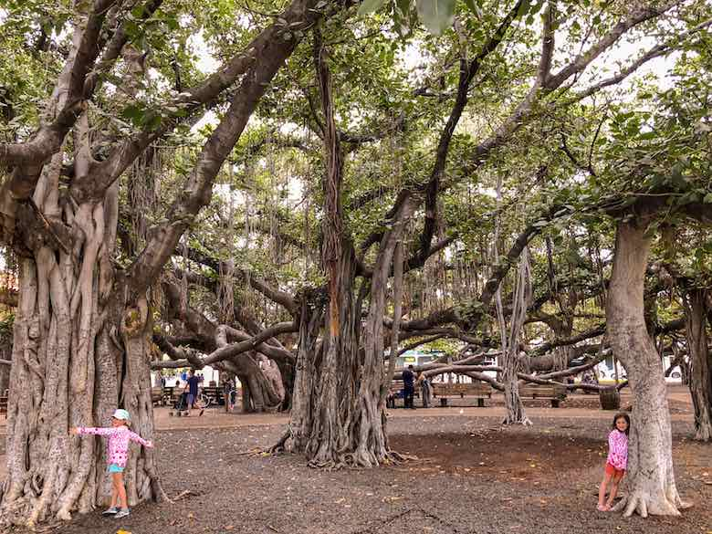 Two little treehuggers in Lahaina Banyan Court Park during a Maui road trip with kids