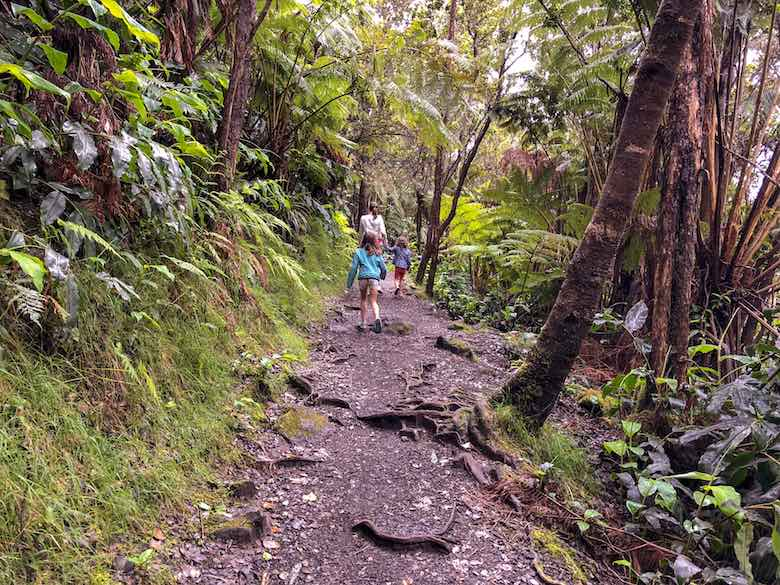 Final part of the Kilauea Iki Trail on Big Island Hawaii goes through the rainforest