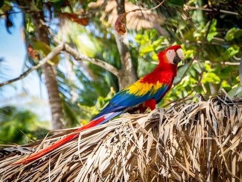 Colorful parrot in Costa Rica