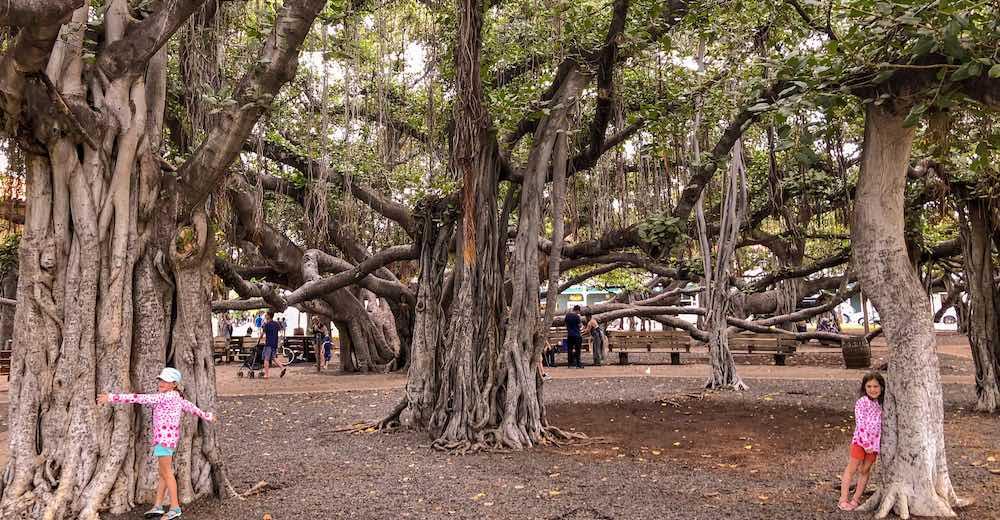 Twee kinderen omhelzen een grote banyan tree op het plein van Lahaina in Maui