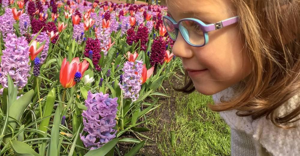 Little girl wearing glasses smelling the hyacinths at Keukenhof Gardens in the Netherlands