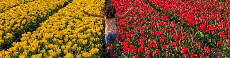 Tulip fields of the Netherlands: Keukenhof Gardens and beyond