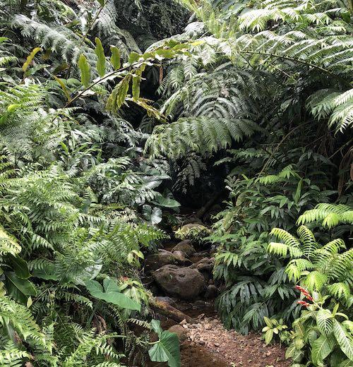 Lush nature at 'Akaka Falls State Park