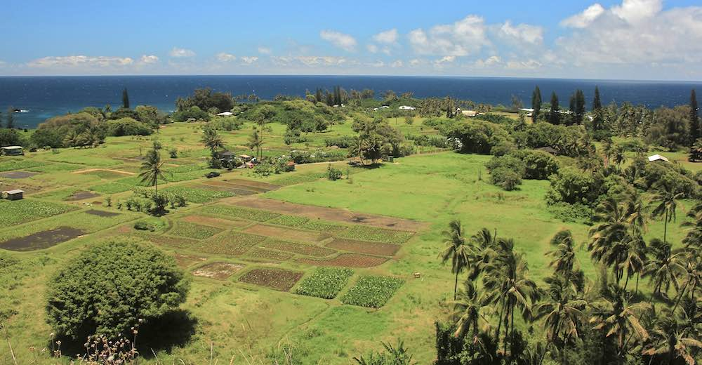 Ke`anae Arboretum is one of the most scenic Road to Hana stops