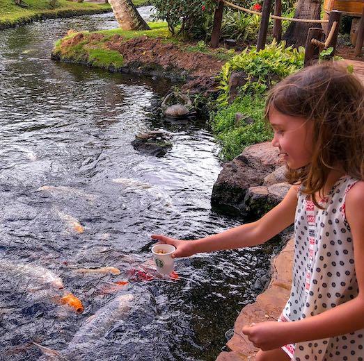 Little girl feeding the koi at this Westin Maui resort