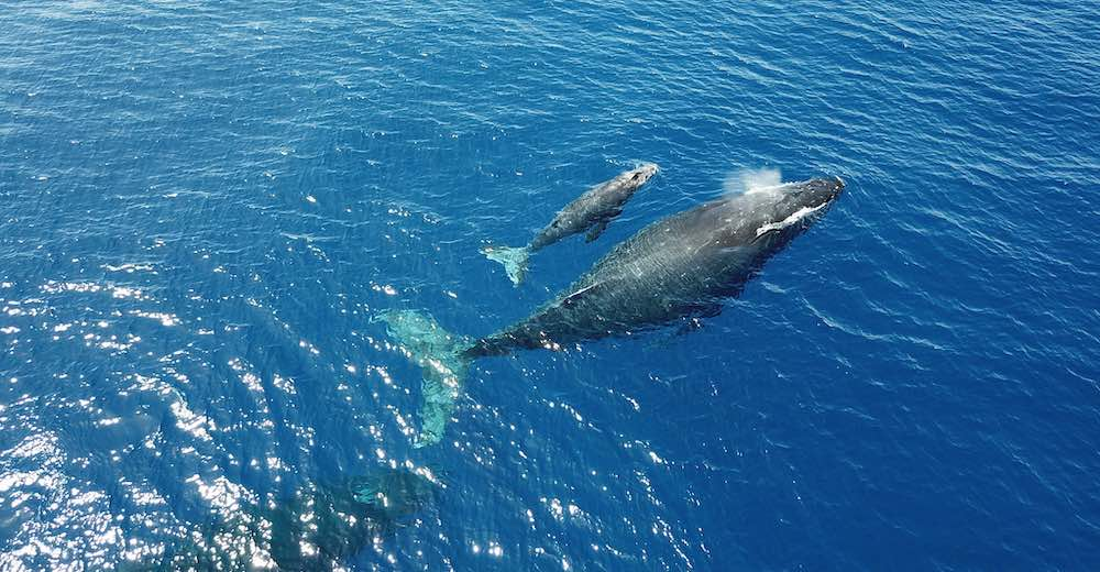 Going on a whale watching cruise is one of the best family activities in Maui