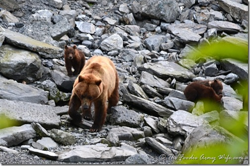 The Grizzlies in Valdez, Alaska | Cosmopolitan Cornbread