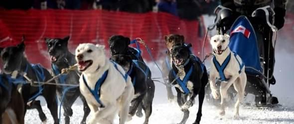 North American Sled Dog Race