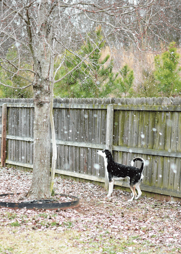 Snow in Northern Alabama