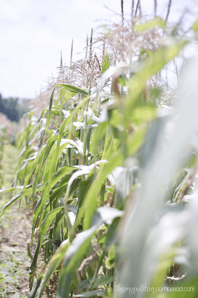 miller-farm-17