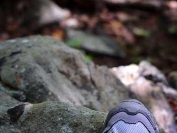 Yellow Bluff Trail in Northern Alabama - from Cosmopolitan Cornbread