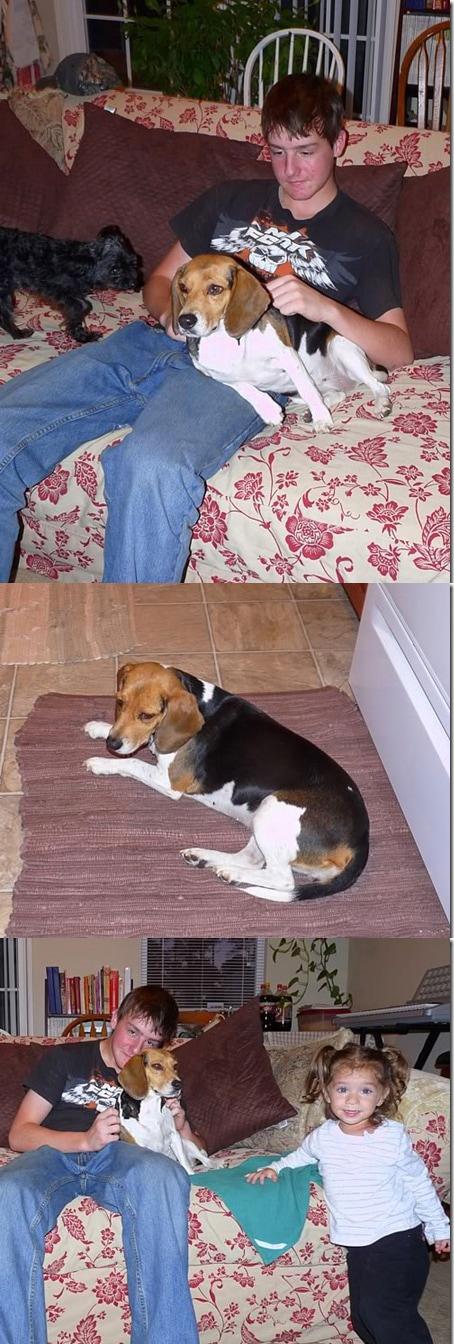 Hemi the Beagle