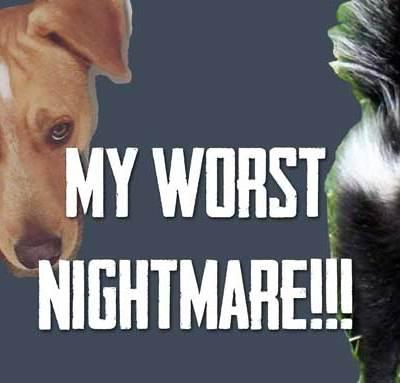 My Worst Nightmare – Duke vs. a SKUNK!   Vlog