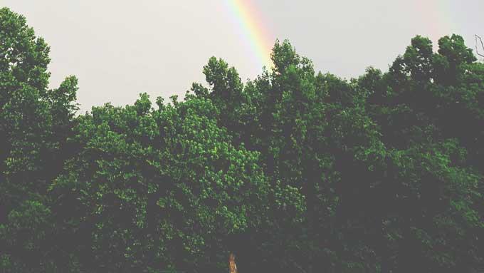 Wordless Wednesday: Rainbow