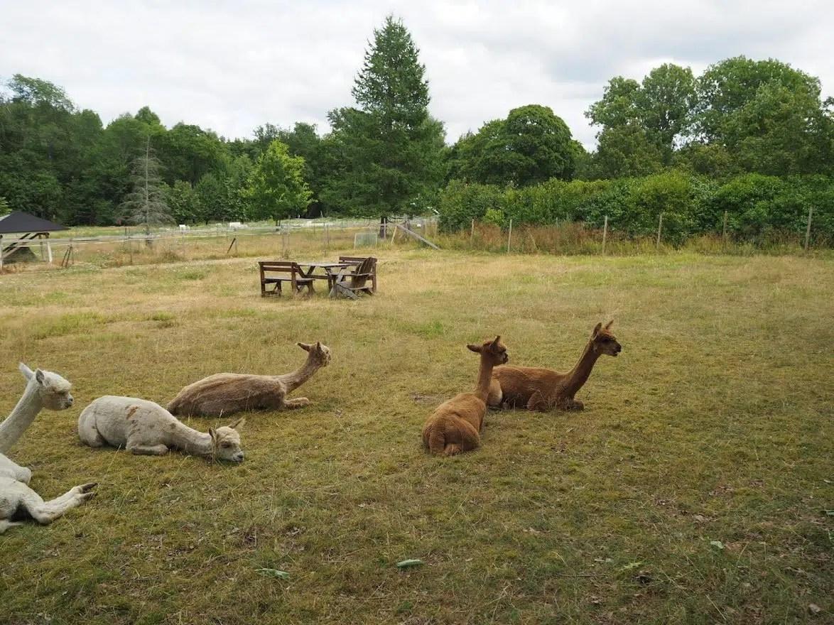 Mathildedal – cute alpacas and tasty food, part I