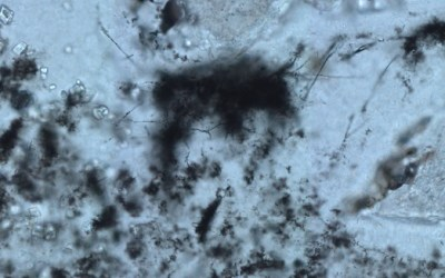 Life Dated Back to 3.42 Billion Years Ago
