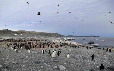 Penguin Poo Reveals Past Populations