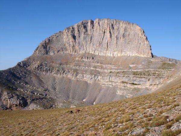 Olympus mountain -stefani and wild goats