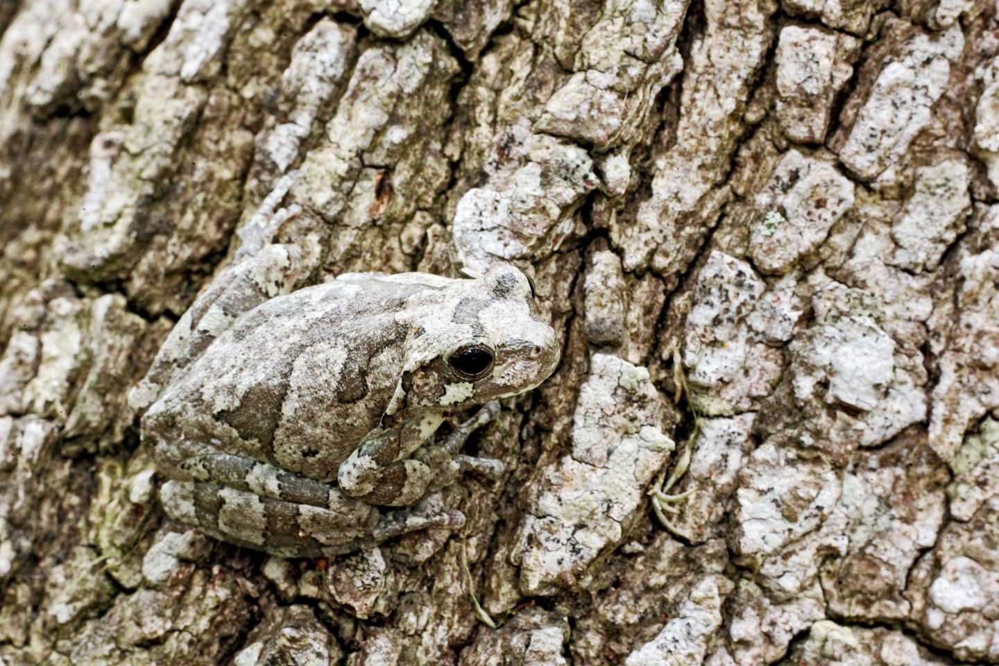 Background Artists Nature S Most Successful Camouflage